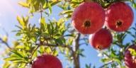 Elizabeth Arden Green Tea Pomegranate